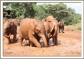 Barsilinga and Lemoyian playing in the puddle.